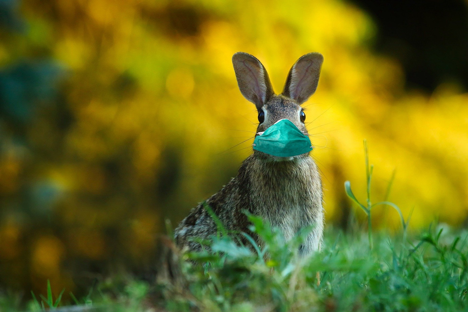 15 Fun Easter Ideas for 2020